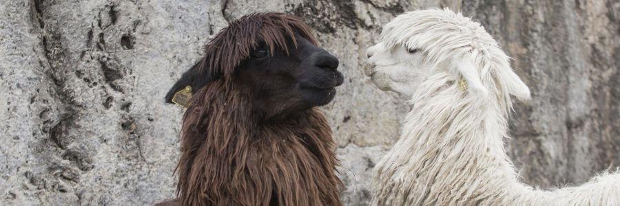 8 Peru Adventures for Your Bucket List