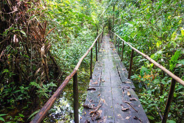 Massage School Abroad - Los Organos, Peru Rain Forest