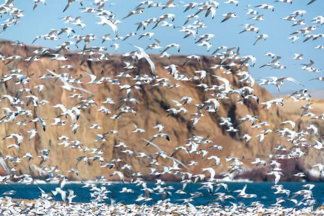 Massage School Abroad - Northern Peru Tern Flock