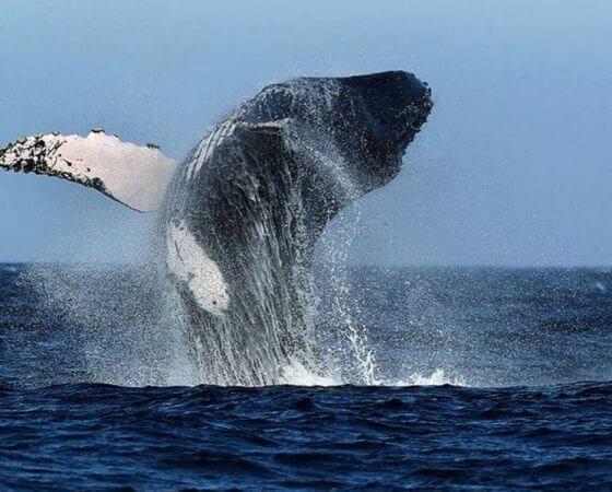 Los Organos, Peru – Whale in Bay