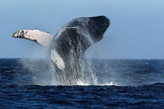 Massage School Abroad - Los Organos, Peru Whale